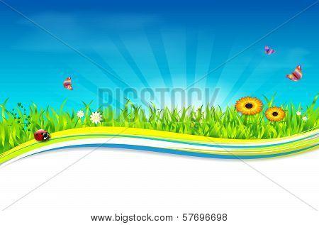 Nature spring - summer background