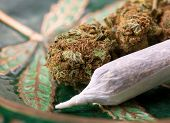 picture of marijuana cigarette  - closeup of dried marijuana and handmade cigarette in ashtray