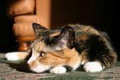 Relaxing Cat... poster