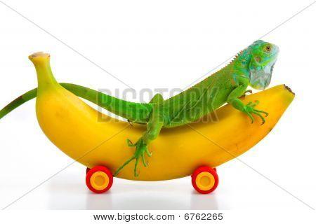 Grüner Leguan auf Bananen mobile