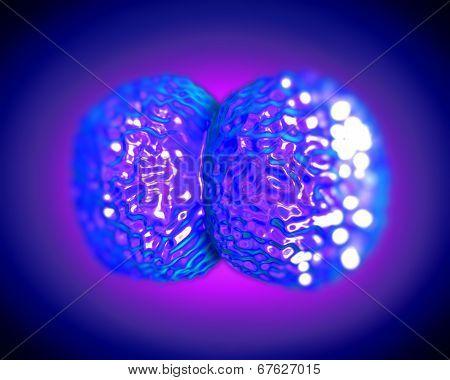 Neisseria meningitidis or meningococcus bacteria