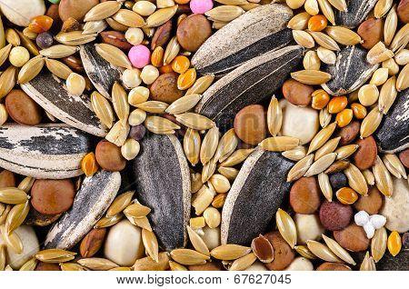 Mixed Bird Food