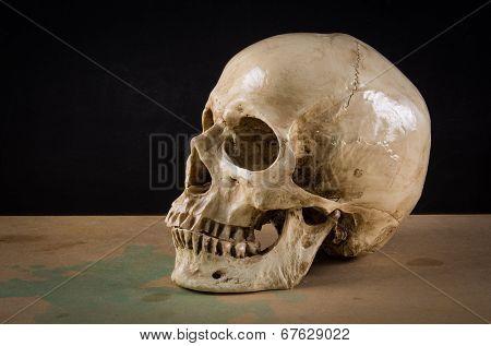 Death Human Skull