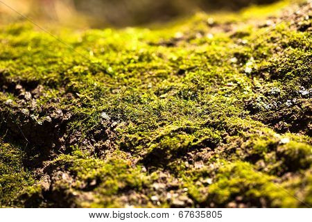 Views of the moss, image of the Japanese Wabi
