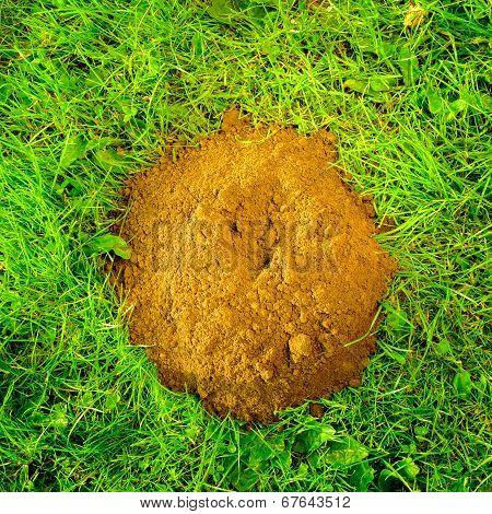 Mole hill created by the European Mole