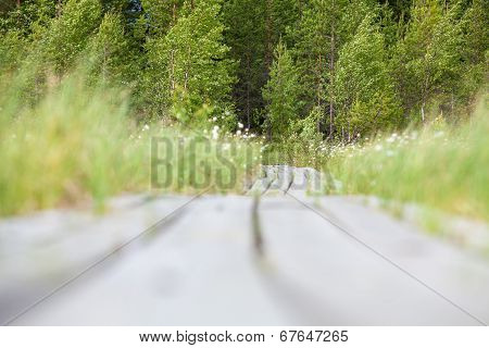 Low Angle View Of Wooden Planks Goes To The Distance To The Evergreen Forest