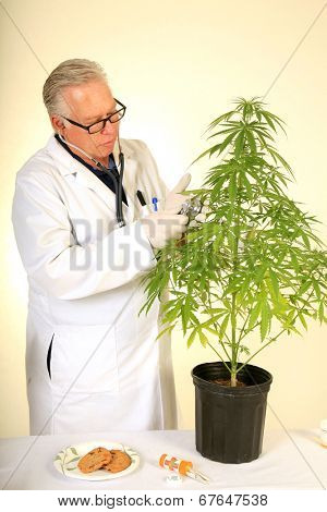 Doctor Sativa a Board Certified Medical Marijuana Doctor listens carefully to the faint