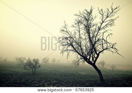 bare trees in the fog, Zaragoza province, Aragon, Spain.