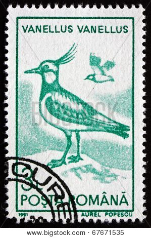 Postage Stamp Romania 1991 Northern Lapwing, Bird