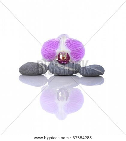 Macro of red orchid with gray stones