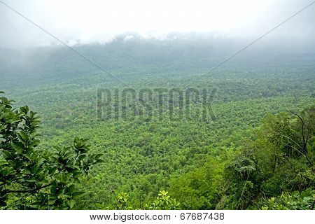 Natural Forest (mixed Forest)