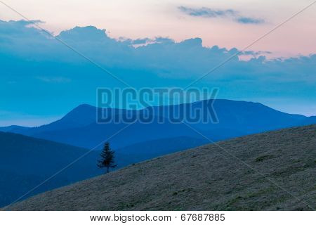 Lonely Tree On The Mountainside
