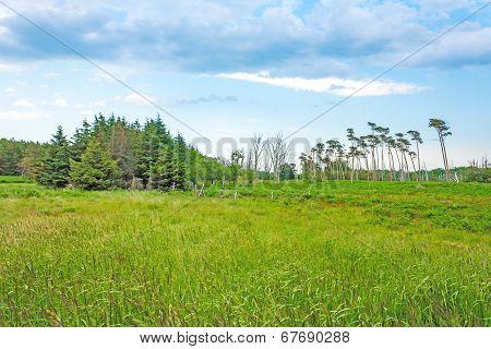 Darss Landscape