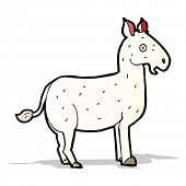 pic of mule  - cartoon mule - JPG