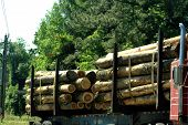 pic of logging truck  - Tree logs tied onto the bed of truck to be transported - JPG