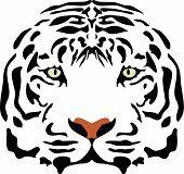 Постер, плакат: Голова тигра
