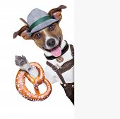 picture of pretzels  - oktoberfest dog smiling happy with bavarian pretzel bread besides a white blank banner or placard - JPG