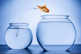 foto of fishbowl  - Gold Fish jumping from one fish bowl to another - JPG