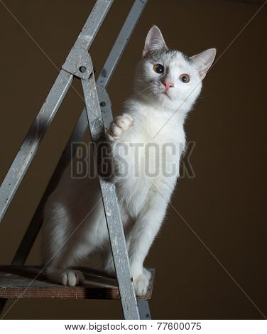 White Kitten With Gray Spots Is Sitting On Ladder