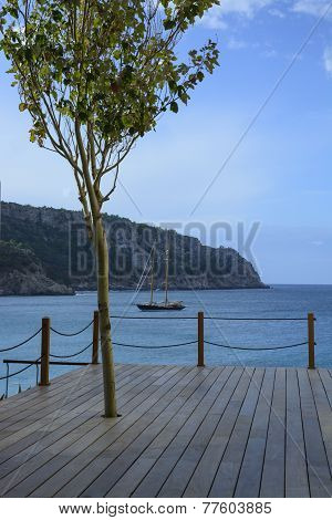 Wood Deck, Tree And Brig