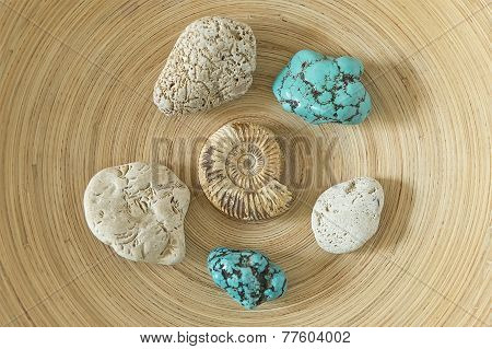 Ammonite And Turquoise