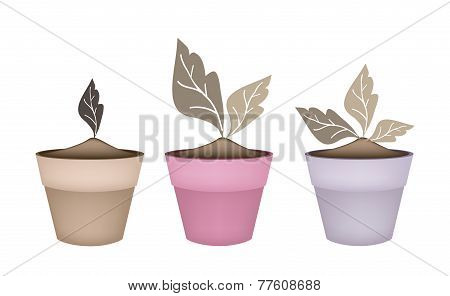 Three Abstract Brown Trees in Flower Pots