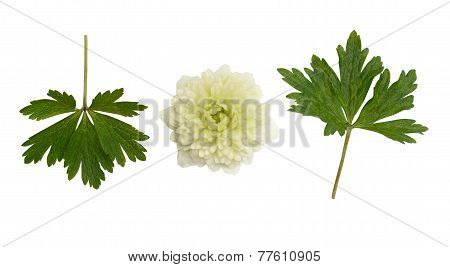 White Flower And Leaves