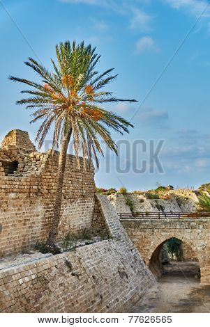 Ancient Ruins With Palm Under Blue Sky