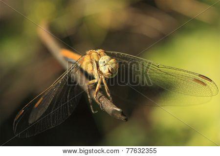dragonfly sit on iron stick,macro shooting