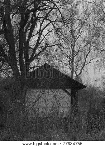 Shed In A Forest