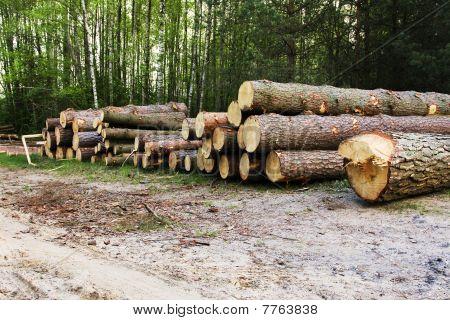 Official destruction of a wood