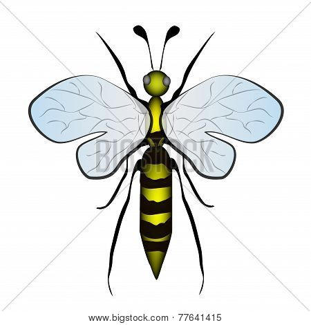 Yellow Bumble  Bee Cartoon Insect On White