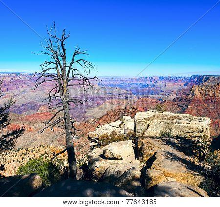 Grand Canyon And Old Dry Tree Foreground, Arizona, Usa