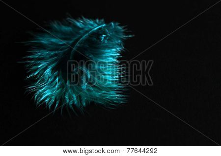 Feather teal