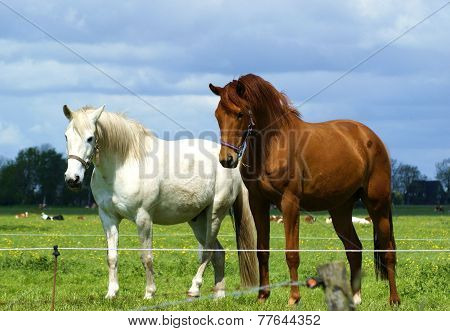 Two beautiful horses