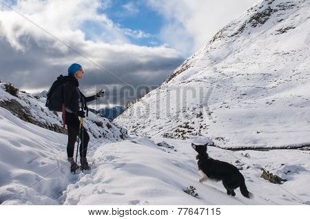 Beautiful Border Collie Plays With The Snow On The Mountain