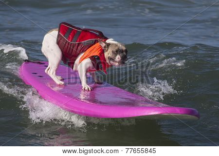 Dog surfing at the beach