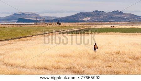 Lone Hunter Bird Dog Hunting Fowl Birds Tule Lake