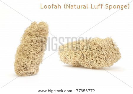 Loofah (natural Luff Sponge) Isolated On White