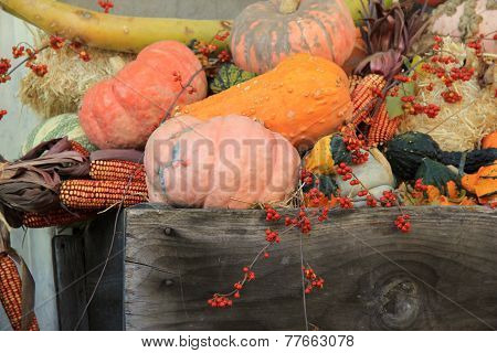 Squash pumpkins and bittersweet