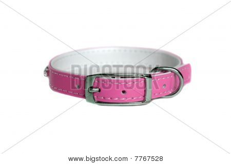 Leather Animal Collar Isolated