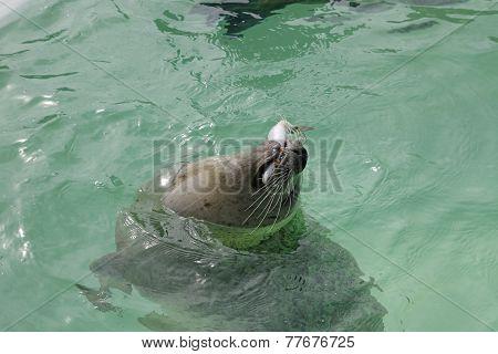 Seal Texel