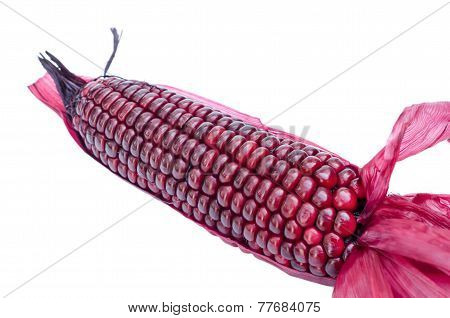 Purple Corn
