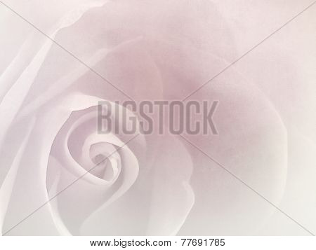 Rose macro - vintage soft flower background