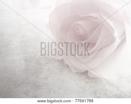 Soft pink rose - vintage flower pattern