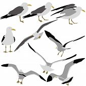 picture of flock seagulls  - Set black silhouettes of seagulls on white background - JPG