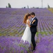 picture of lavender field  - A young couple in love - JPG