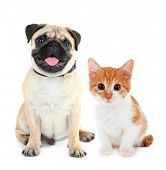 stock photo of puss  - Funny pug dog and little red kitten isolated on white - JPG