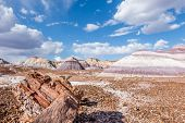pic of petrified  - Petrified wood amidst towering hills with colorful bands of silt sand and gravel in the Blue Mesa area of the Painted Desert - JPG