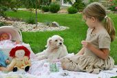 picture of parti poodle  - A four year old has a tea party with her dog - JPG
